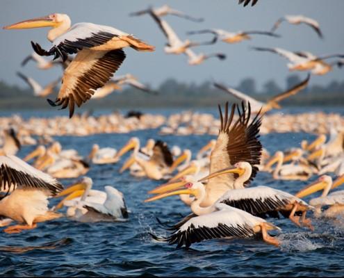 Danube Delta Yurtdışı Fotoğraf Turu